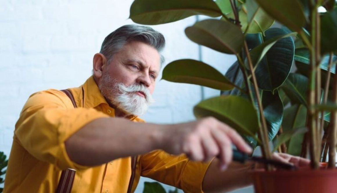 Indoor Gardening for the Elderly