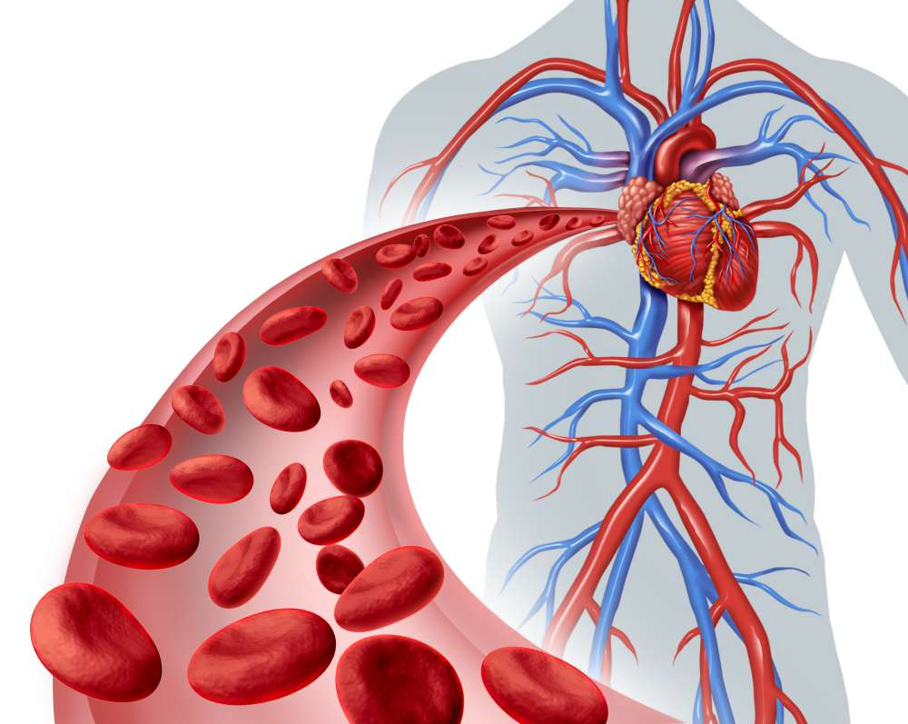 Inversion Table Enhances Blood Circulation