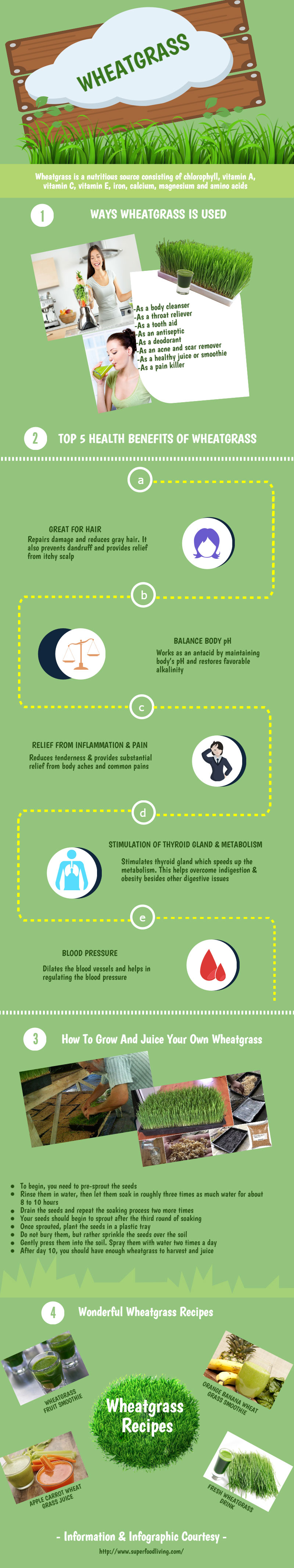 Wheatgrass Benefits Infographic