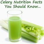 Celery Nutrition Facts and Benefits That Every Dieter Should Know