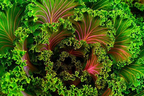 3 Facts about Kale
