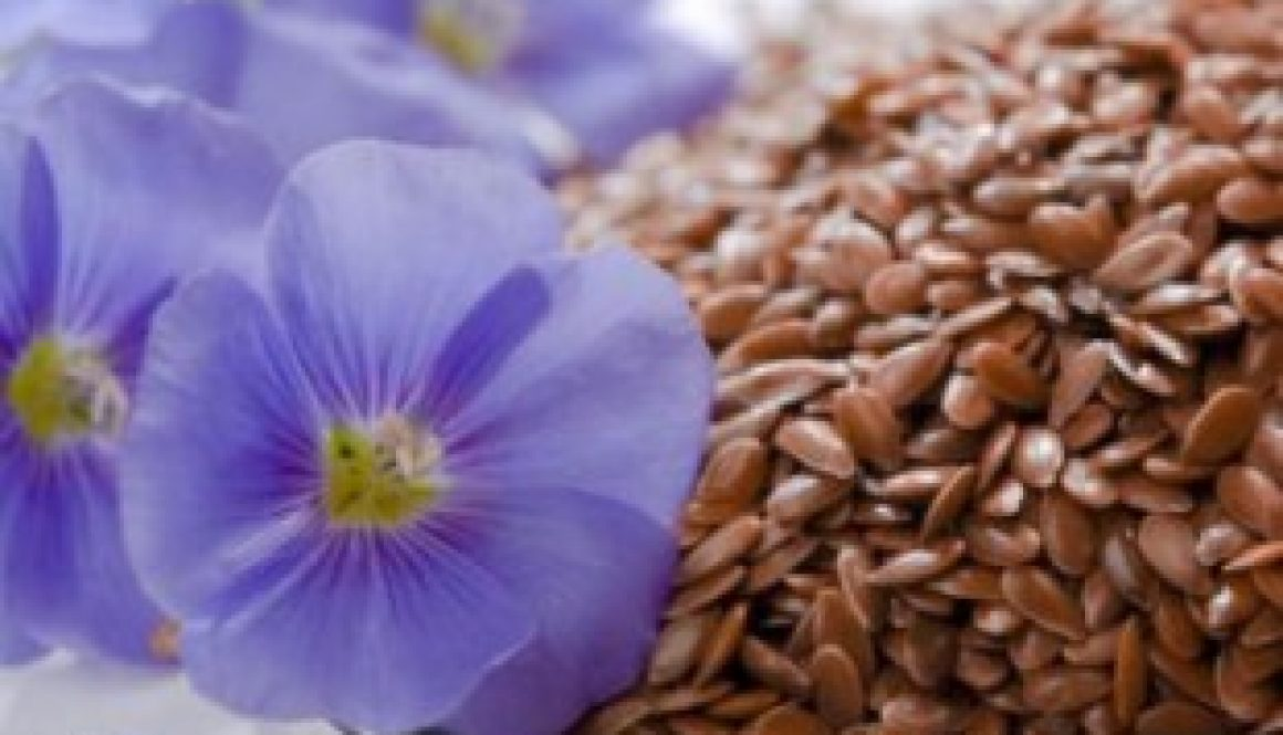 Flax Seed Benefits