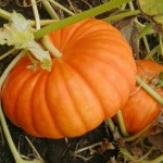 Pumpkin Health Benefits to Know