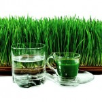 Wheatgrass Benefits, How to Grow and Make Juice
